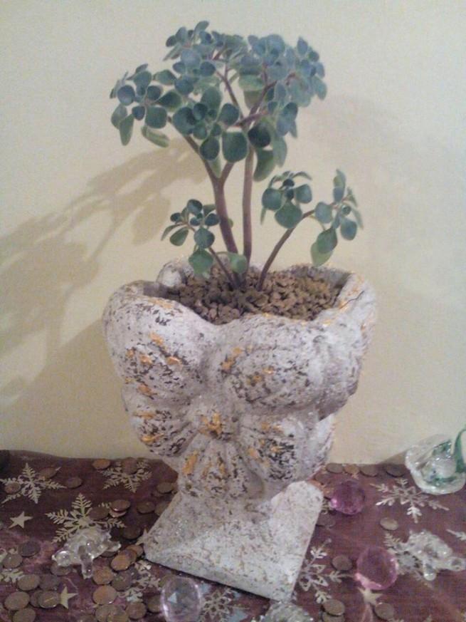 Дърво на парите, Фън Шуй, Цветозар Мръвков, фън шуй консултации